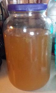 Making the kombucha in a large gallon jar